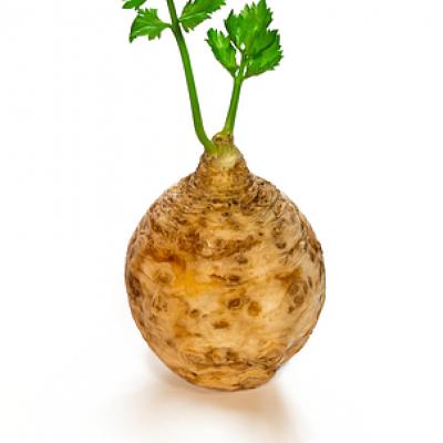 Korijen celera