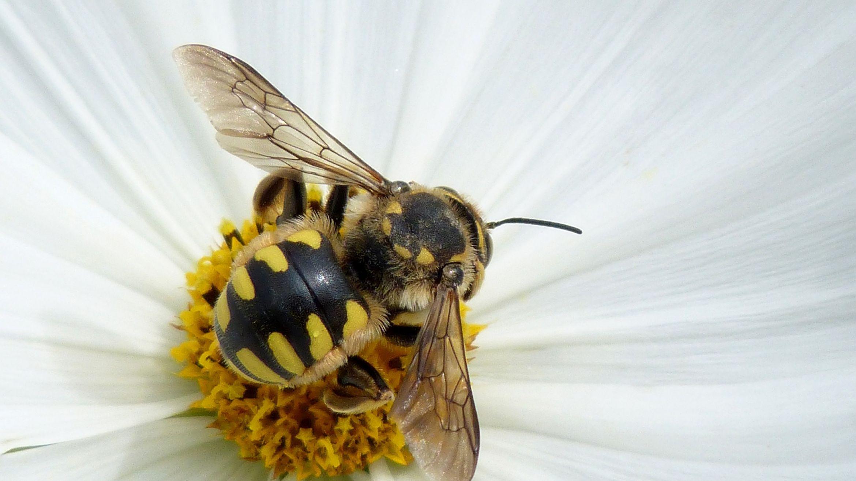 Perga - pčelinji kruh